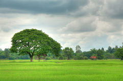 Hut in the rice field Royalty Free Stock Photography