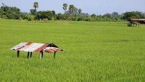 Hut on rice field Royalty Free Stock Photos