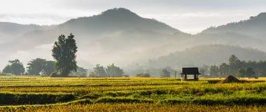 Hut in rice field Stock Photos