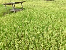 Hut in the rice field Stock Images
