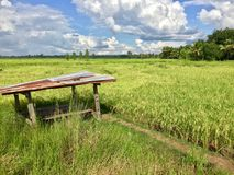 Hut in the rice field Royalty Free Stock Photo