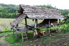 Hut in rice field, countryside in Thailand Royalty Free Stock Images
