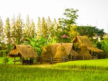 Hut in rice field, countryside in Thailand. Stock Photography