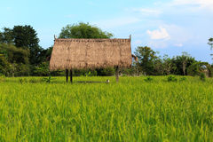 Hut and rice field Royalty Free Stock Photo