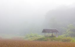 Hut in the rice field on a misty winter morning, thailand Stock Photos