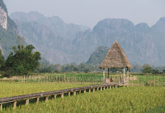 Hut on rice field Royalty Free Stock Images