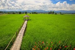 Hut and rice field in nature Stock Images