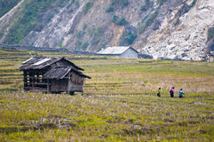 Hut on rice field Royalty Free Stock Image