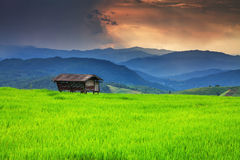 A hut in the rice field over mountain range Stock Photo