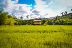 A hut in a rice field Royalty Free Stock Images