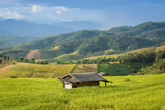 Hut in rice field. Of Thailand royalty free stock images
