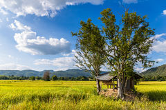 Hut and Rice Field in Thailand Royalty Free Stock Images