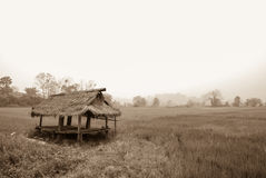 Hut with rice field, Thailand Royalty Free Stock Image