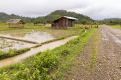 Hut in rice fields next to road Stock Photos