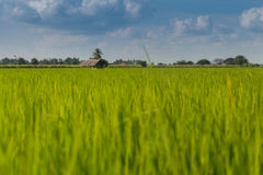 Hut in rice fields. Suphanburi, Thailand Stock Images