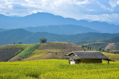 Hut in rice paddy. The hut in race paddy among beautiful landscape royalty free stock image