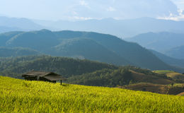 Hut in rice paddy. The hut in race paddy among beautiful landscape royalty free stock photography