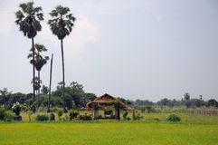 Hut in rice paddyfield Stock Images