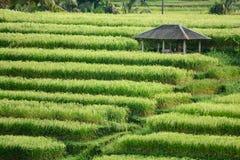Hut on rice terrace. The hut on rice terrace stock photo