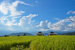 Hut and rice terrace. Hut in the rice terrace with blue sky Thailand Stock Image