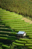 Hut on rice terrace Royalty Free Stock Photography