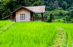 Hut rice thailand. The hut and terrace rice field Royalty Free Stock Photo