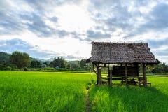 Hut in rijstlandbouwbedrijf Stock Foto's