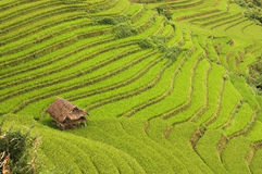 Hut surrounds by rice terraces Royalty Free Stock Photos
