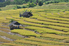 The hut and terrace rice field Royalty Free Stock Images