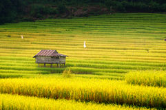The hut and terrace rice field Stock Photos