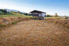 Hut in the terrace rice field Royalty Free Stock Photo