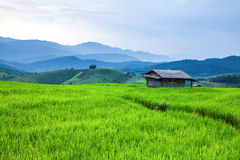 Hut and terrace rice field Royalty Free Stock Images