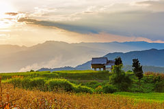 A Hut in the terrace rice field Stock Photography