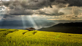 Hut in terrace rice field with storm clouds Royalty Free Stock Image