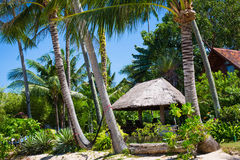 Hut with a thatched roof among coconut palms Stock Image