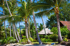 Hut with a thatched roof among coconut palms Royalty Free Stock Image