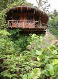 Hut in top of tree in jungle Stock Photo