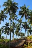 Hut under coconut palms Royalty Free Stock Photo