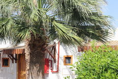 Hut under the palm tree. Hut under a palm tree. exotica Royalty Free Stock Photos