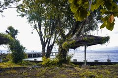 Tree in the park and Pier in the beach stock image