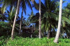 Hut under trees Stock Photos