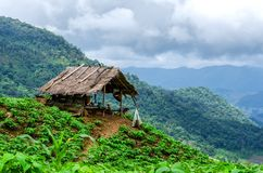 An  hut view point at Phu Chi Fa in Chiang Rai, Thailand. View of an  hut view point at Phu Chi Fa in Chiang Rai, Thailand Royalty Free Stock Photo