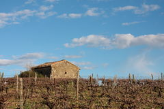 Hut in a vine, Occitanie in France Stock Photo