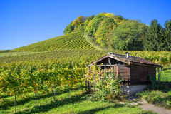 Hut in the vineyard Royalty Free Stock Images