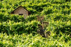 Hut in a vineyard Royalty Free Stock Photos