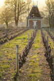 Hut in vineyards, Beaujolais, France Royalty Free Stock Images