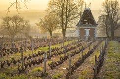 Hut in vineyards, Beaujolais, France Royalty Free Stock Photos