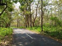 Hutan pinus Royaltyfri Foto