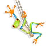 huśtawkowy żaby drzewo Zdjęcia Royalty Free