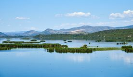 Hutovo Blato Bird Reserve, Bosnia and Herzegovina Royalty Free Stock Image